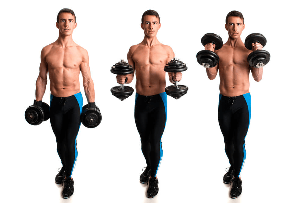 hammer curls exercise