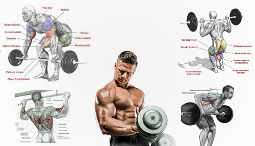 Best Workouts to Build Muscles