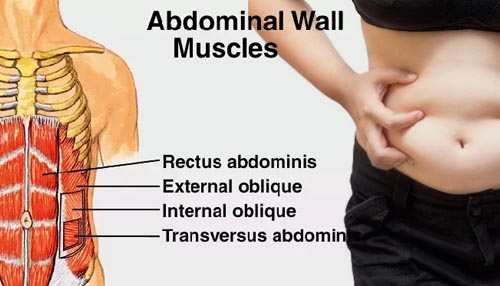 Too Much Body Fat that covers Your Abdominal Wall